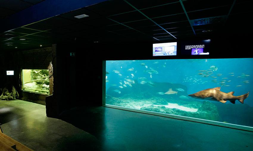 Interior del acuario de Sevilla