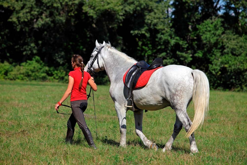 Paseo a caballo por El Aljarafe